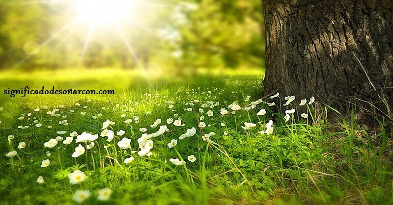 Significado de soñar con flores